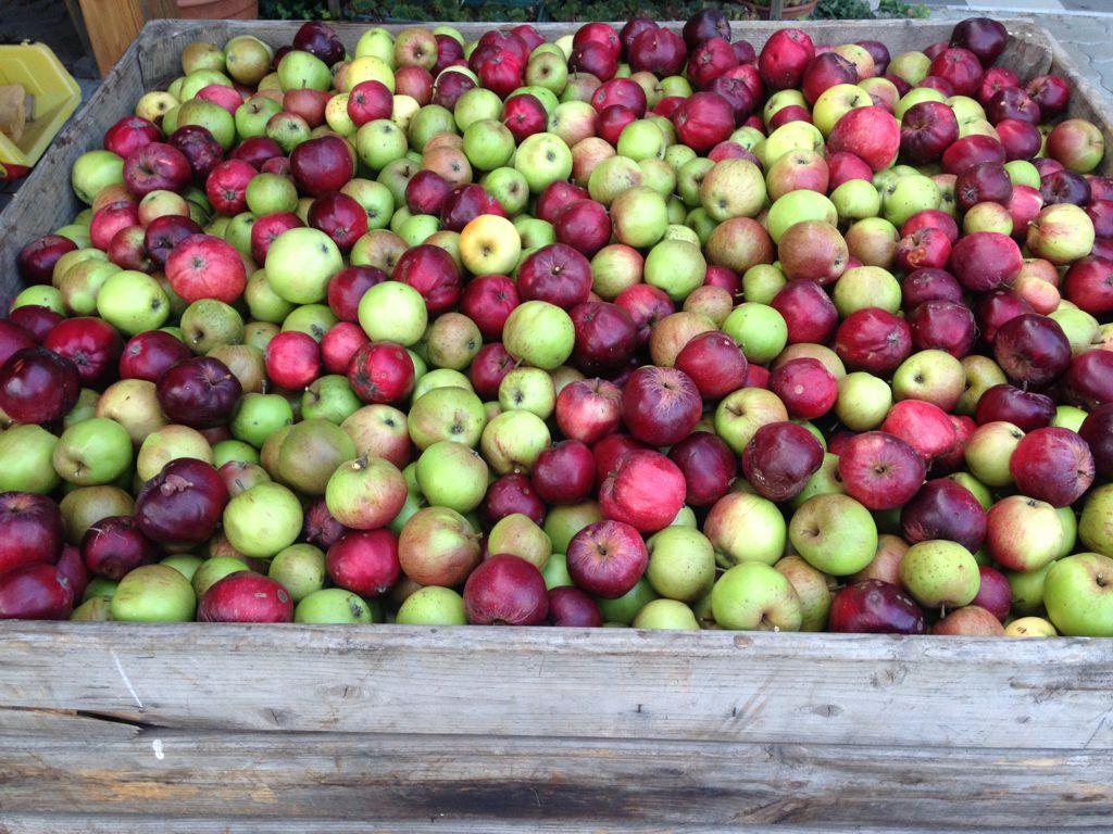 Handverlesene Äpfel